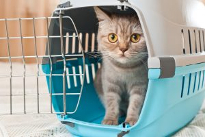small paws pet hotel tips on cat travel