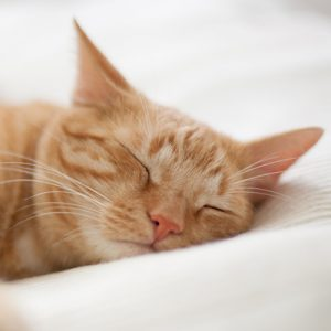 Choosing the right cat hotel
