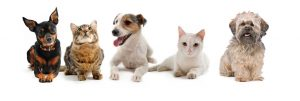 Duffys-forest-small-paws-hotel-for-small-dogs-and-cats-min