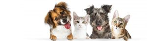 Smallpaws-hotel-Sydney-for-small-dogs-and-cats