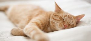 SmallPaws-Pet-Hotel-for-cats-and-small-dogs