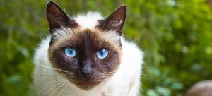 smallpaws-cat-boarding-sydney