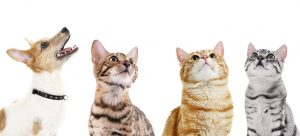 smallpaws-perfect-for-dog-and-cat-boarding-Sydney
